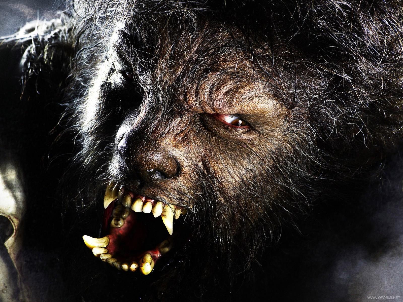 Человек волк википедия - 9c11