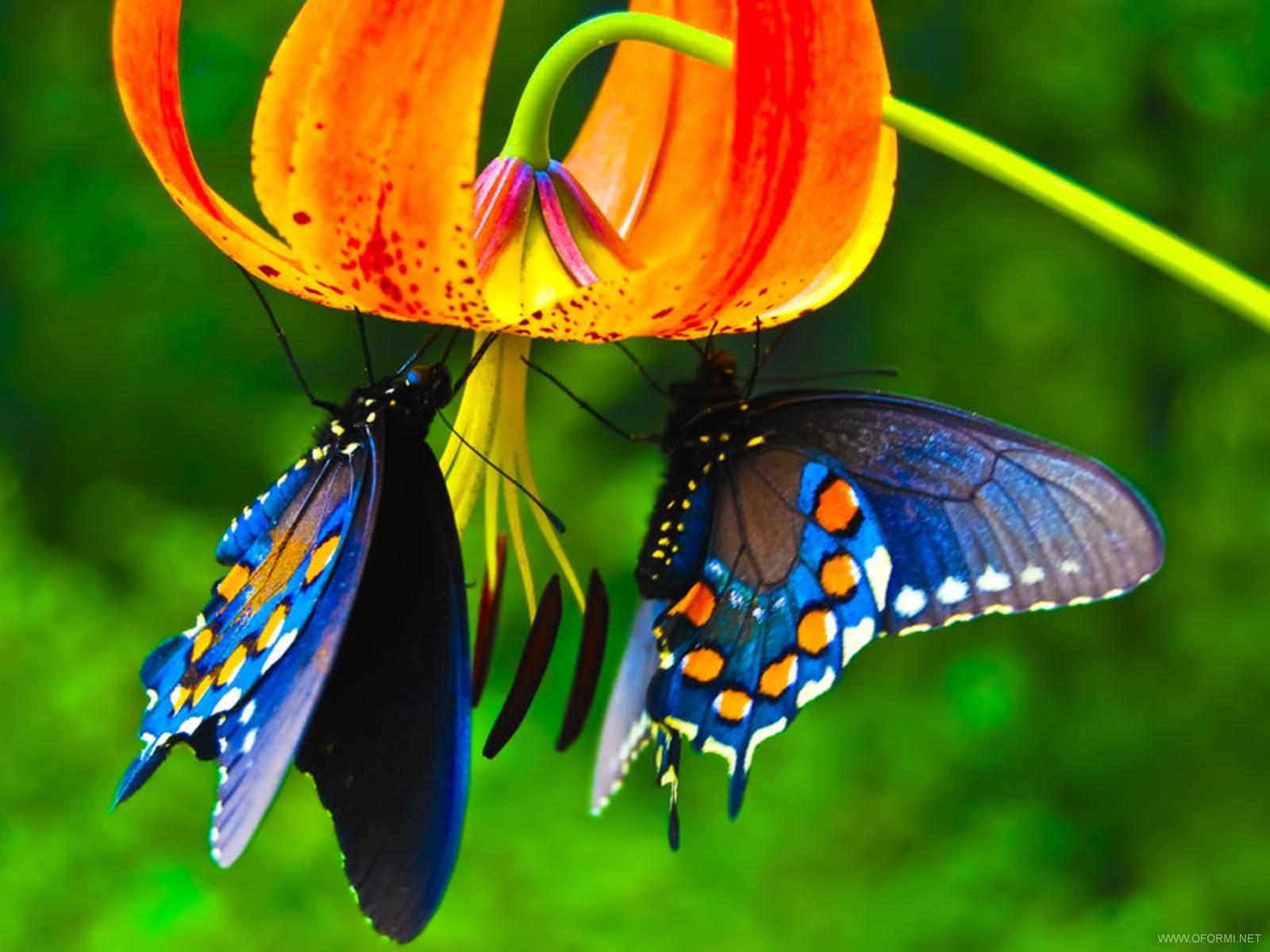 Бабочка на цветах природа