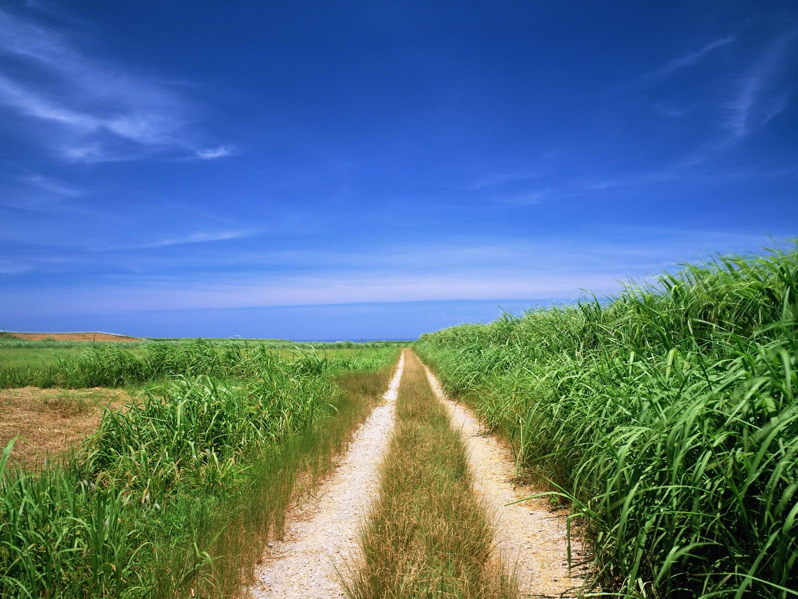 фото дорога в поле
