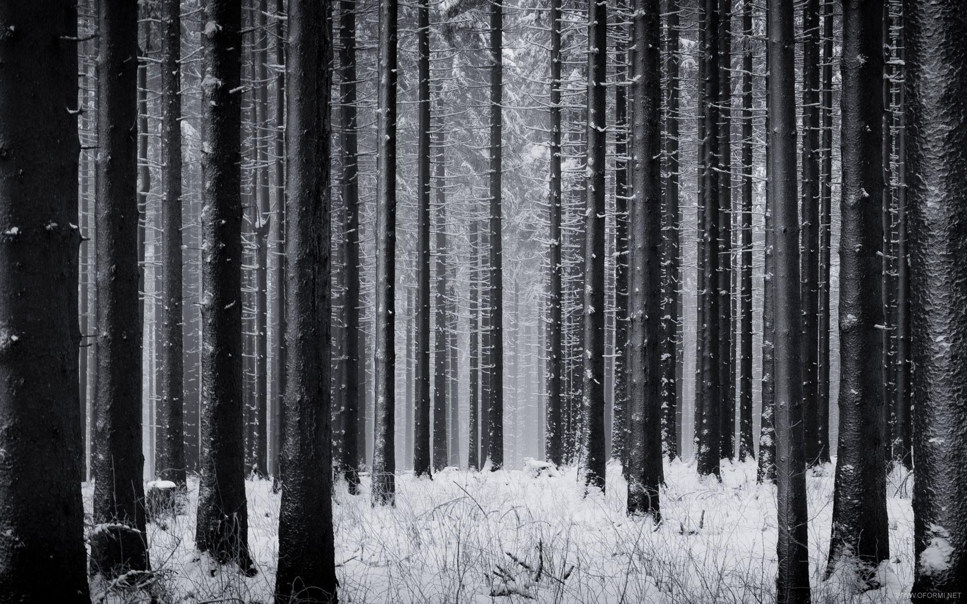 Обои для рабочего стола темный лес