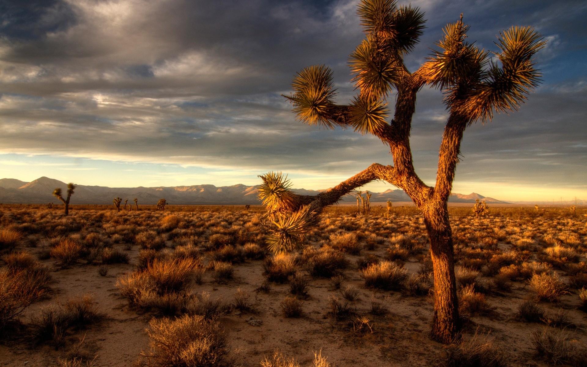 Стола природа пустыня пустыня