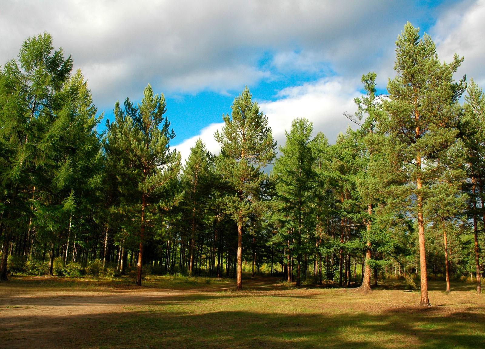 Крупнейший в мире искусственный лес - лес Херсонщины