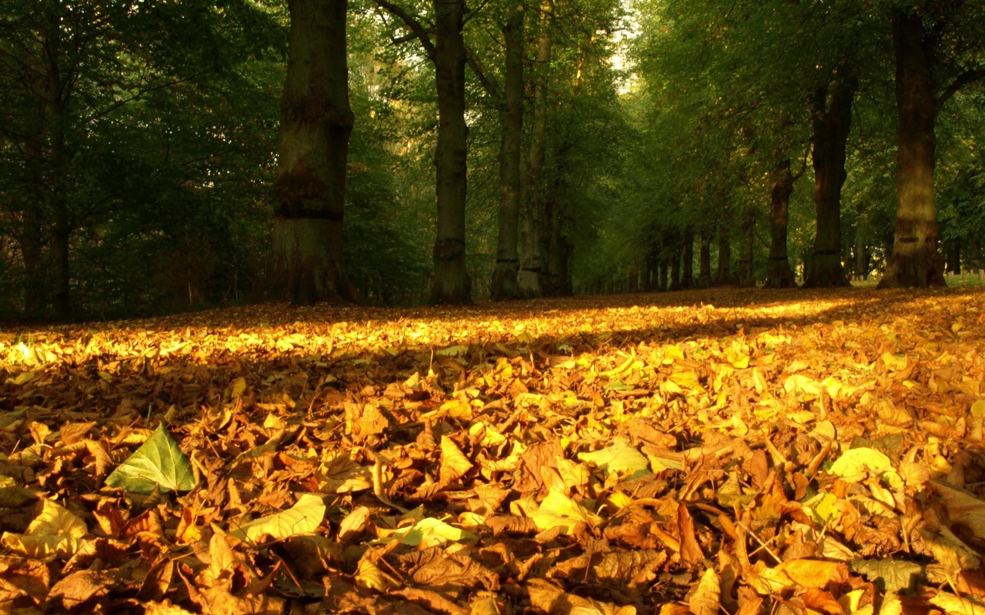 Осень в парке природа галерея