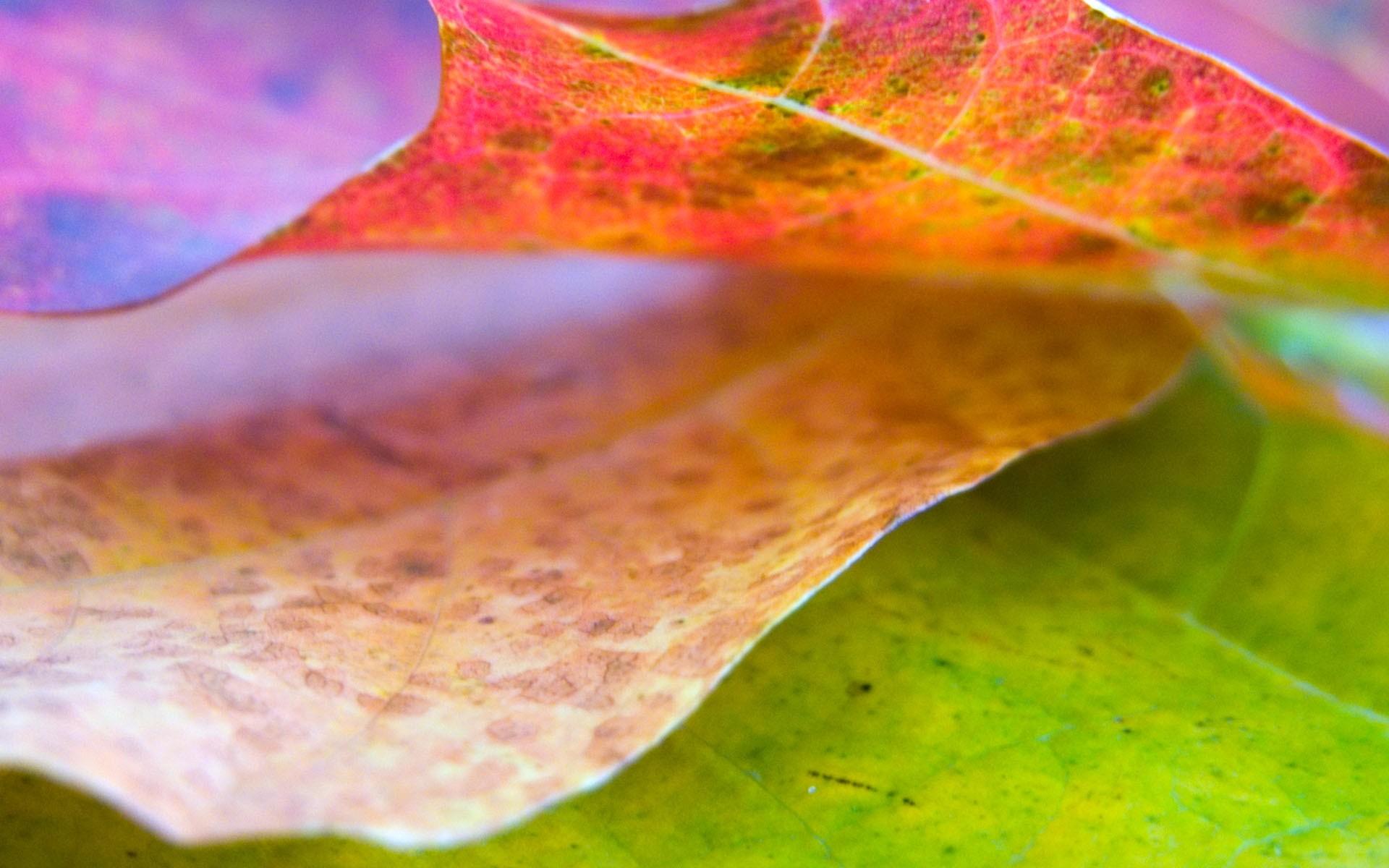 Природа листья осень листья осень
