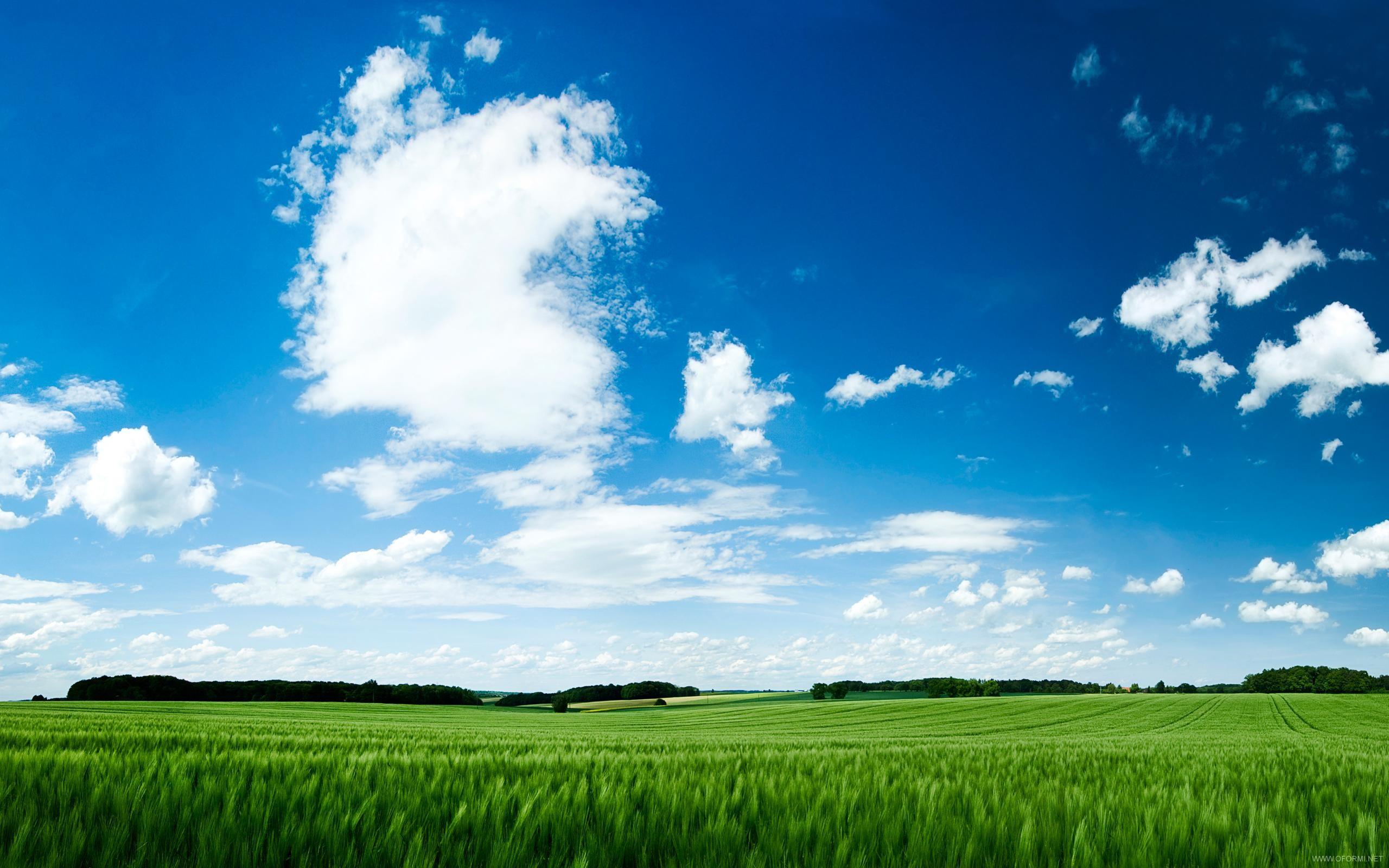 поле травы обои на рабочий стол № 31460 без смс