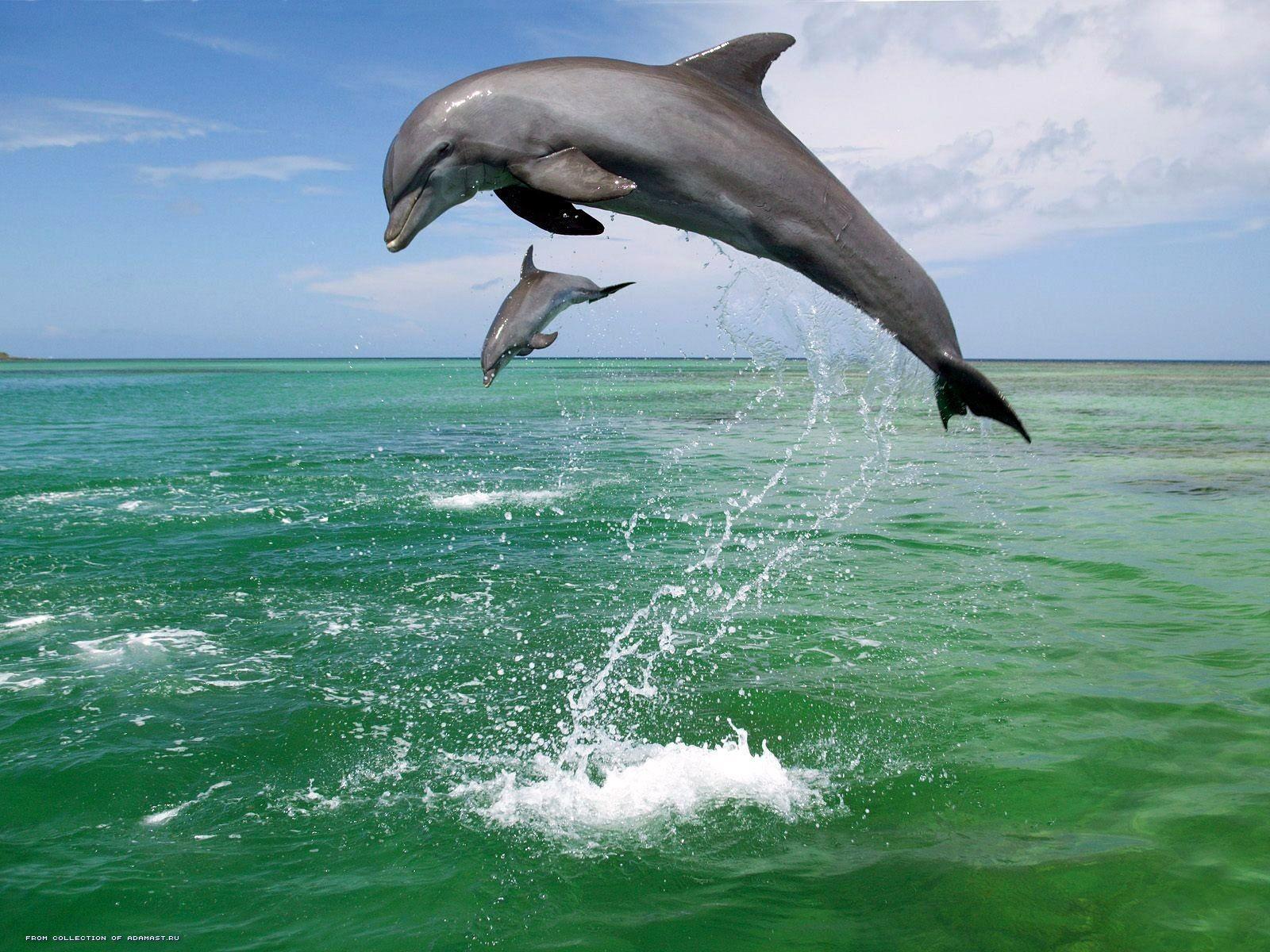 Стола животные дельфины дельфины