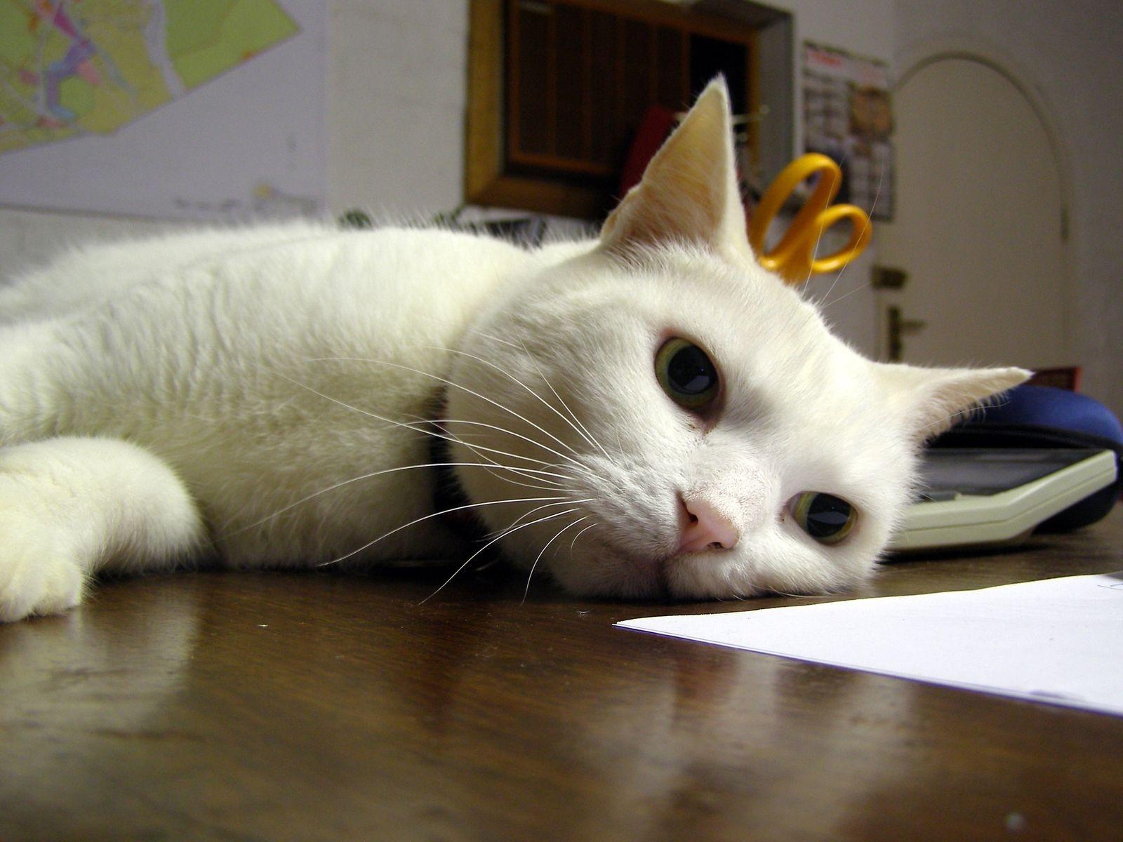 Картинка кот уставший