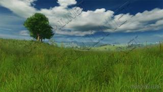 Grassland 0D