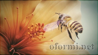 Furry bumblebee